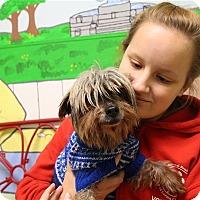 Adopt A Pet :: Tammy Faye - Elyria, OH