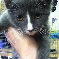 Adopt A Pet :: Boo - Shippenville, PA