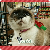 Adopt A Pet :: Suzie - San Fernando Valley, CA