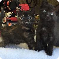 Adopt A Pet :: China & Asia - Horsham, PA