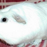 Adopt A Pet :: Muncie - Steger, IL