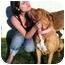 Photo 3 - Dogue de Bordeaux/Dogue de Bordeaux Mix Dog for adoption in Phoenix, Arizona - Fiona