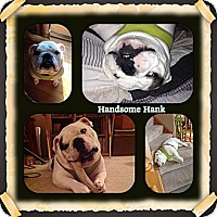 Adopt A Pet :: Hank - Decatur, IL
