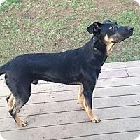 Adopt A Pet :: Finn - Mill Creek, WA