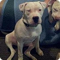 Adopt A Pet :: Snoopy - Nuevo, CA