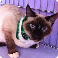 Adopt A Pet :: Jet M - Sacramento, CA