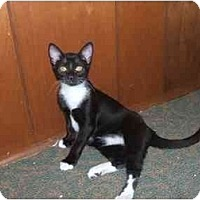 Adopt A Pet :: Adam (DS) - Little Falls, NJ