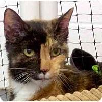 Adopt A Pet :: Sara - Alexandria, VA