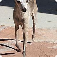 Adopt A Pet :: Penelope - LV - San Diego, CA