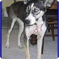 Adopt A Pet :: Kiah - Hamilton, ON