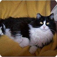 Adopt A Pet :: Jessie - Clay, NY