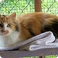 Adopt A Pet :: Duchess - Dover, OH