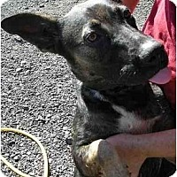 Adopt A Pet :: Trixee - Fowler, CA