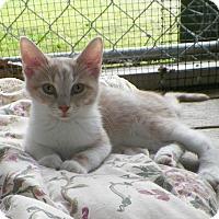 Adopt A Pet :: Sprite - Dover, OH