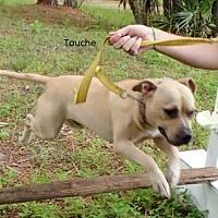 Adopt A Pet :: Touche - Malabar, FL