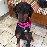 Adopt A Pet :: Ramona--pending - New Richmond, OH