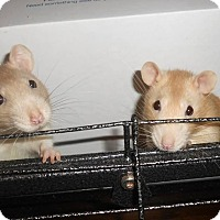 Adopt A Pet :: PUMPKIN and SPICE - Philadelphia, PA