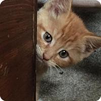 Adopt A Pet :: Harold - Herndon, VA
