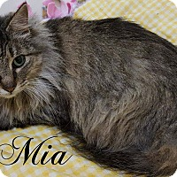 Adopt A Pet :: Mia - Columbia, TN
