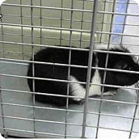 Adopt A Pet :: *Urgent* Beau - Fullerton, CA