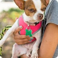 Adopt A Pet :: Leyla - Santa Fe, TX
