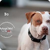 Adopt A Pet :: Bo - La Crosse, WI