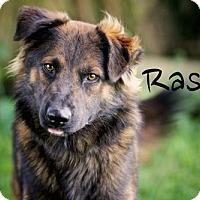 Adopt A Pet :: Rascal - Joliet, IL
