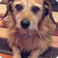 Adopt A Pet :: Lucy - Trenton, NJ