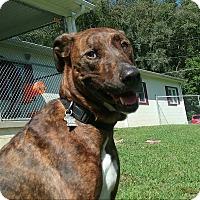 Plott Hound Mix Dog for adoption in Shinnston, West Virginia - Gracie