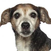 Adopt A Pet :: Lilly - Oakland Park, FL