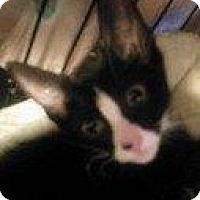 Adopt A Pet :: YODA 2 - Hampton, VA