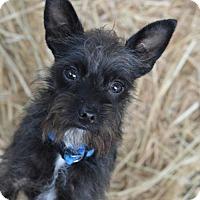 Adopt A Pet :: Pokemon - Vacaville, CA