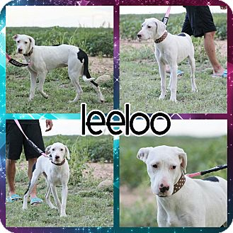 Great Dane Mix Dog for adoption in Lubbock, Texas - Leeloo