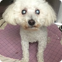 Adopt A Pet :: Tink-BLIND - Oak Ridge, NJ