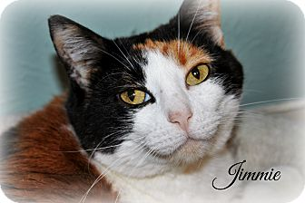 Calico Cat for adoption in McKinney, Texas - Jimmie