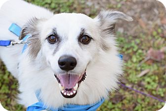 Collie Mix Dog for adoption in Summerville, South Carolina - Grace