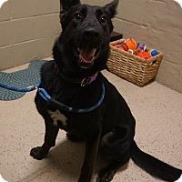 Adopt A Pet :: Beauty - Wyandotte, MI
