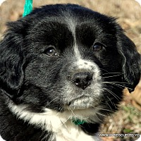 Adopt A Pet :: SOPHIE/ADOPTED - PRINCETON, KY