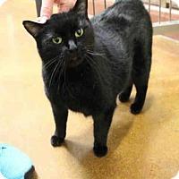 Adopt A Pet :: CAITE - Louisville, KY
