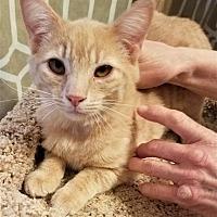 Adopt A Pet :: Charybdis - Woodinville, WA