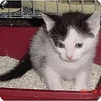 Adopt A Pet :: Phantom Right - Inverness, FL