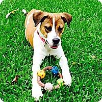 Adopt A Pet :: Sasha - Miami, FL