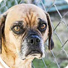 Adopt A Pet :: Tobe