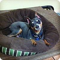 Adopt A Pet :: Diesel - Davie, FL