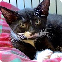 Adopt A Pet :: Josh - Victor, NY