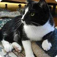 Adopt A Pet :: Hamlet - Wakefield, MA