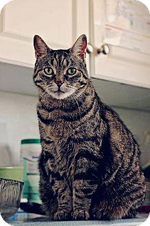 Domestic Shorthair Cat for adoption in Markham, Ontario - Granny