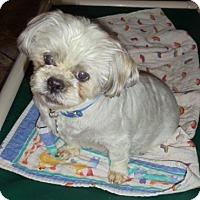 Adopt A Pet :: Eepany - Florissant, CO