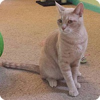 Adopt A Pet :: Simba - Fayette City, PA