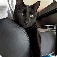 Adopt A Pet :: B-Boy - San Diego, CA